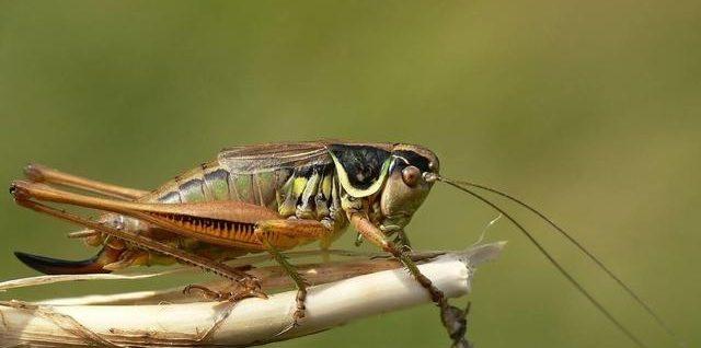 部编版语文四年级《蟋蟀的住宅》一等奖教案