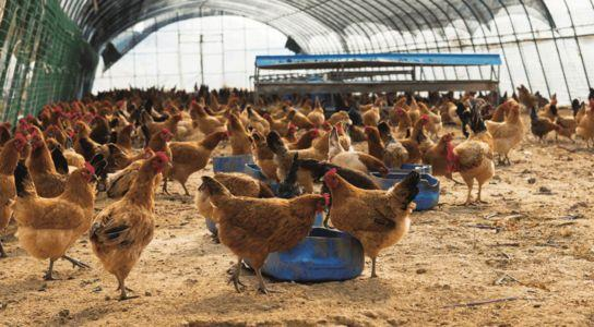 国家对农业有哪些补助?最新农业补贴政策介绍