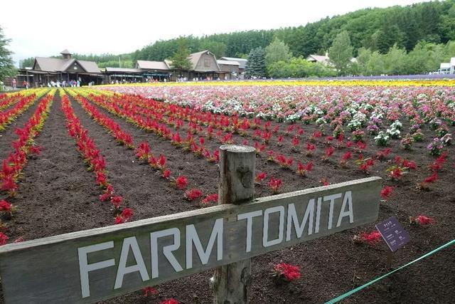 未来农业--休闲农庄年收入过亿元的典型分析