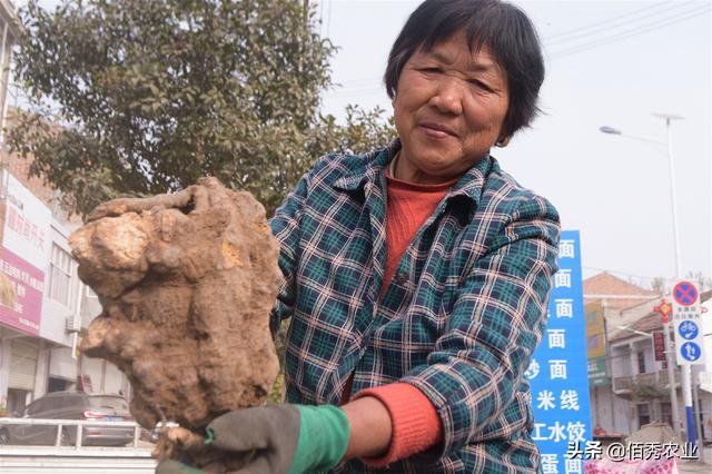 农村有种作物,产量和红薯媲美,亩赚1万多元,专家已发出预警