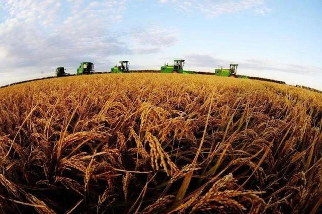 品牌农业已经乱象丛生,农企业如何找寻最佳的上行路径?