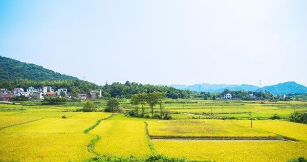 休闲农业项目如何融资?记住五个关键点