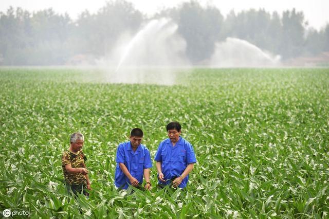 日本、美国农产品为何不滞销?中国的问题到底出在哪里