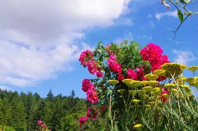 花卉都被玩腻了?6个国内外经典案例将重新定义花卉旅游