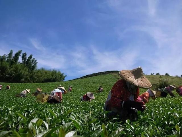 定制农业:马云构想之一,适合小农户,营销新模式(附方案)