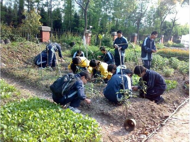 悲哀!20年来,中国有机农业从未发生变革与创新