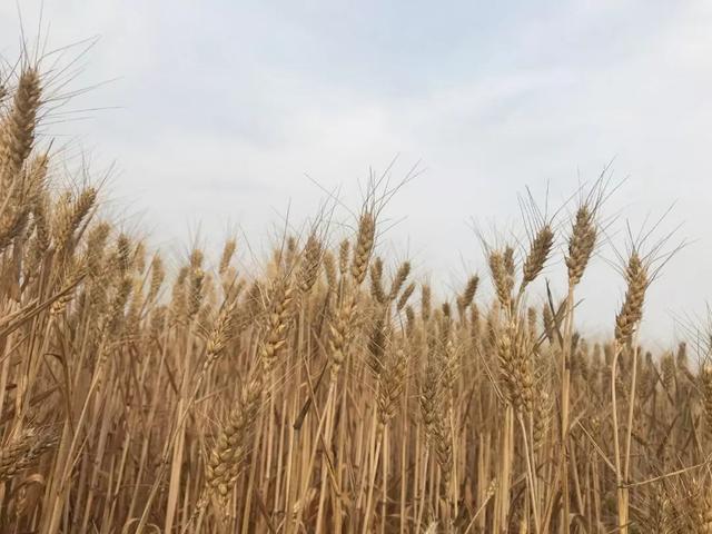 农村承包荒山做农业,注意事项及补贴政策要清楚!