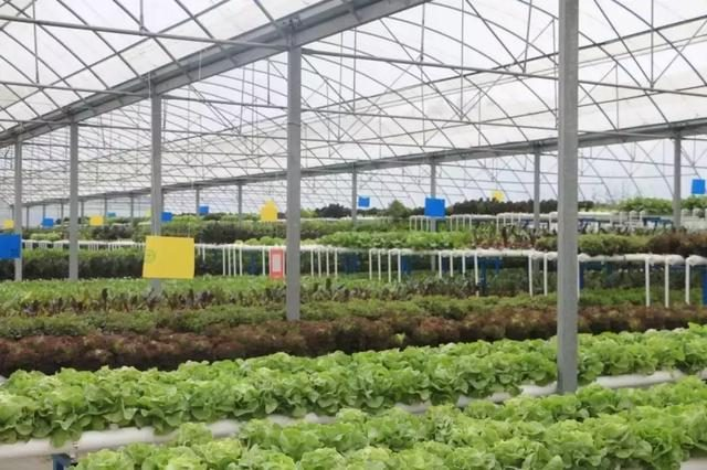 水培蔬菜如此受欢迎,水培技术却如此简单