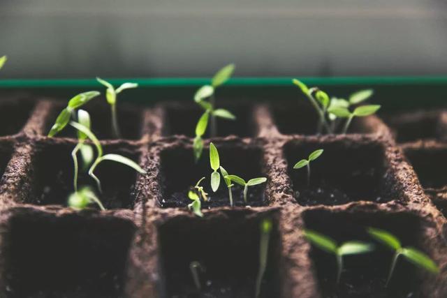 农业生产托管,为何是中国农业重要发展趋势?(附6大模式)