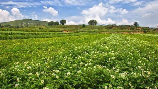 农业农村部推介!河南这五县上榜全国农村创新创业典型县