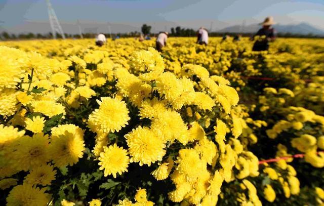 2020年國家將開展休閑農業重點縣建設與認定,附專家建議