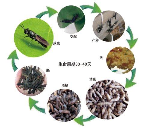 【视频】农民养殖小昆虫:投资2万,月盈利5万元