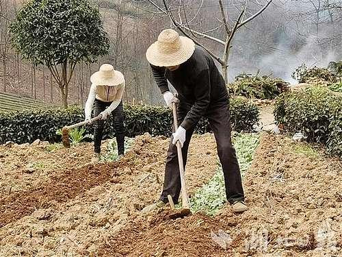 湖北农业农村部门党员干部下沉到村组抓防控和春耕