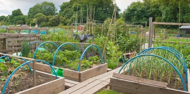 现代农业园区你知道怎么规划吗?