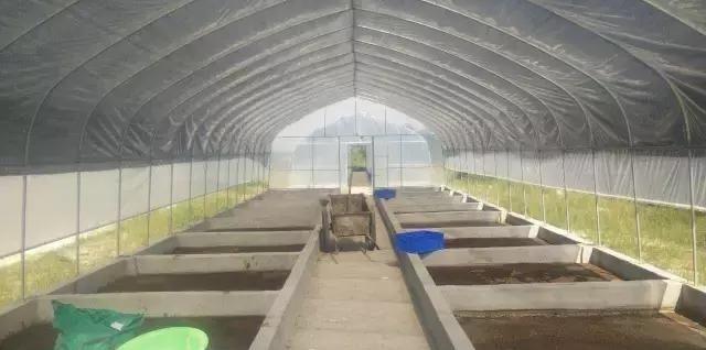 养殖场粪便处理新技术案例:黑水虻处理猪粪方案