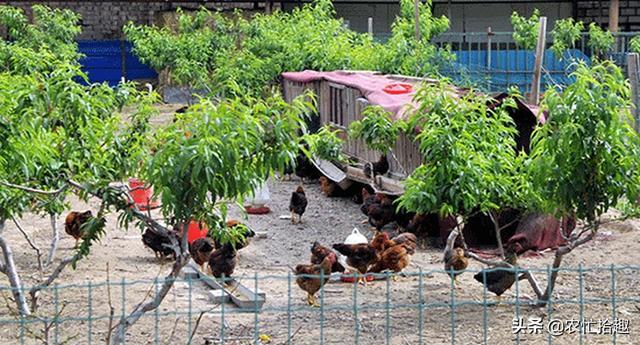 疫情沖擊之下,生態農莊漸冷,新鮮食材配送服務值得做嗎?