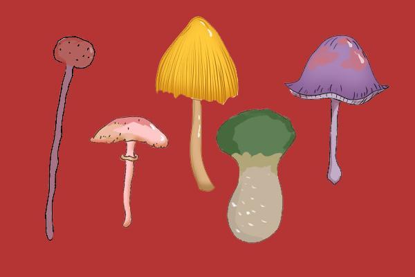 研学:蘑菇味道为什么那么鲜美?如何防控野生蘑菇中毒?