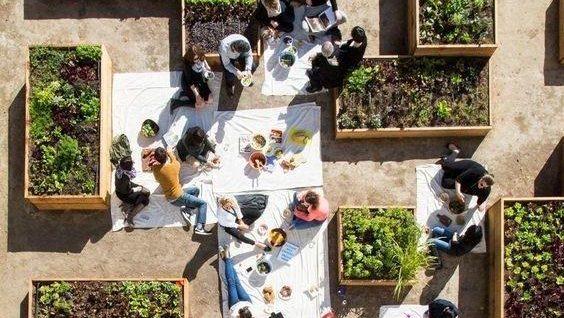 要是有个大院子,我也做成拼盘花园,中间放休闲椅,四周种花种菜