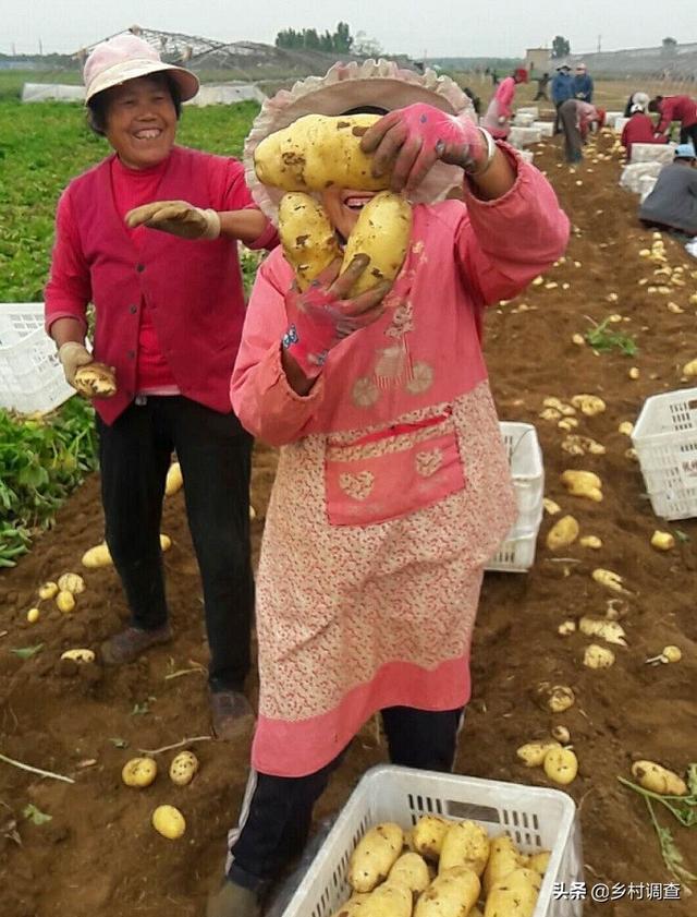 中国农业真实现状危也!要好好想想我们该怎么办了!