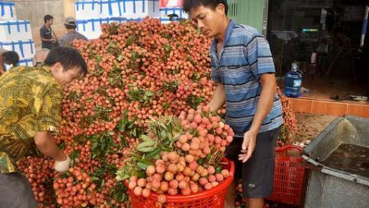 """价格""""大跳水"""",收购商坐地观望,果农很着急,吃货:等10元3斤"""