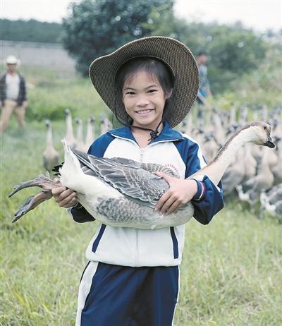 种草养鹅主题的生态观光农庄:生态放养的基本要求,如何选林地/果园?