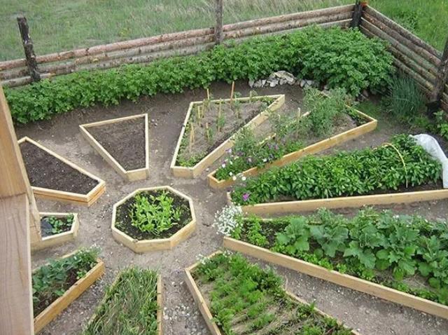 要是有个乡村大院子,我也做成这种拼盘的休闲菜园子