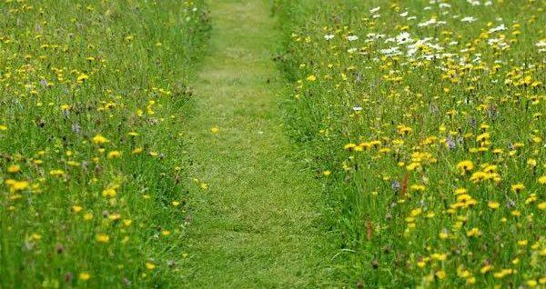 8个乡村花园创意设计方案,低成本营造的超美景观