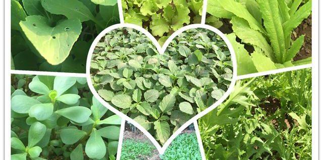 想种点叶菜又怕虫?掌握这些栽培技术,蔬菜长得棒棒哒