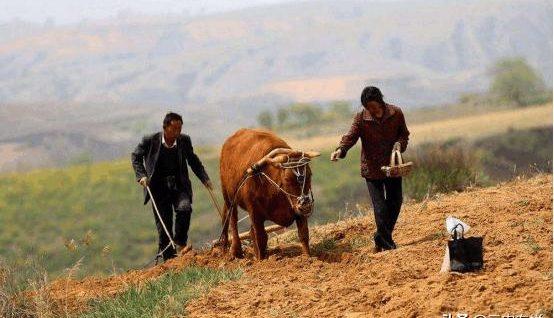 农民面临的大问题,不是农民根本不懂