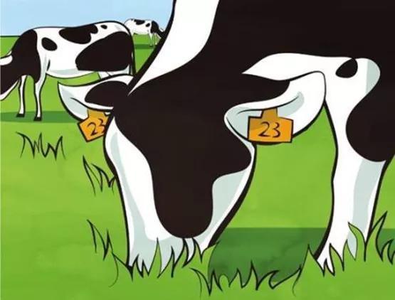 对比进口牛奶,国产为何更贵?业内人士:饲养依赖进口拉高成本