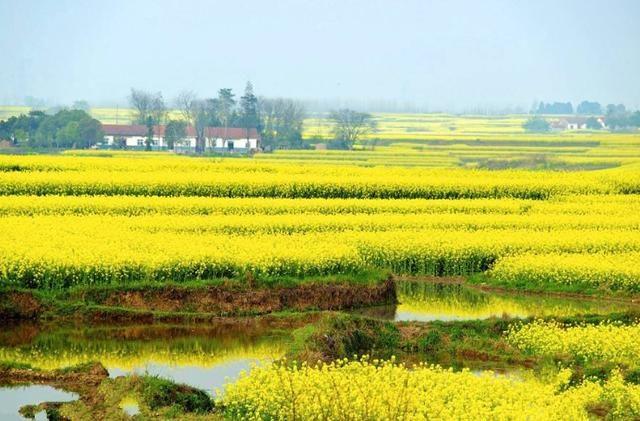 湖北的江汉平原为何有这么多湖泊?