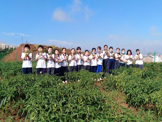 平江县官塘中心小学:校园劳动实践基地正式挂牌