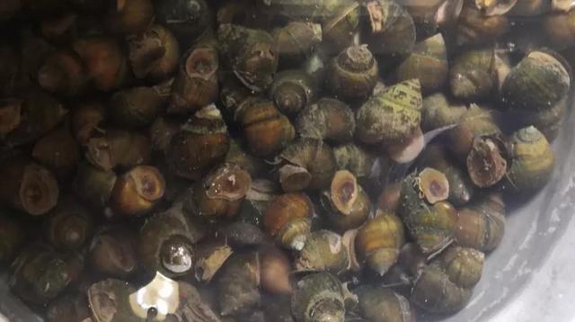 稻鳅-稻鳖-稻螺模式:稻渔综合种养生产技术指南