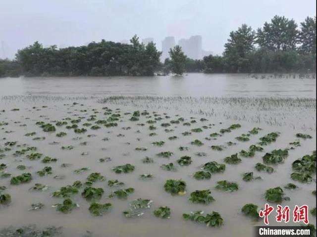 """2020年洪涝灾害下""""米袋子""""""""菜篮子""""影响如何?怎样恢复农业生产?"""