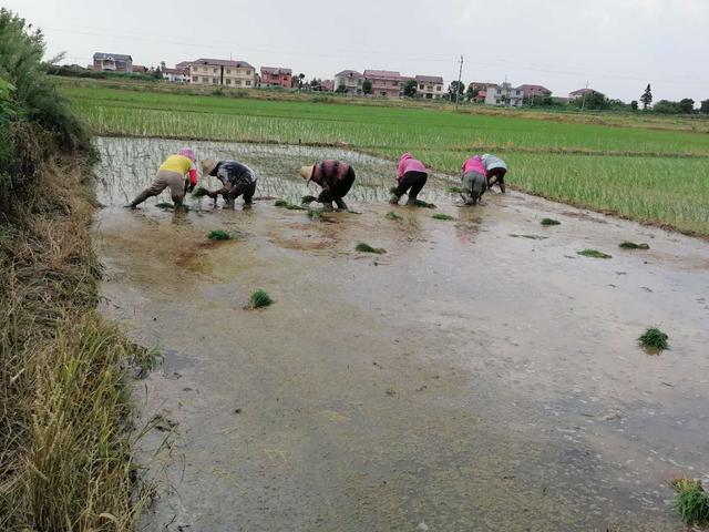 荆楚多地与江西南昌县:开展农业生产自救,尽快恢复农业生产