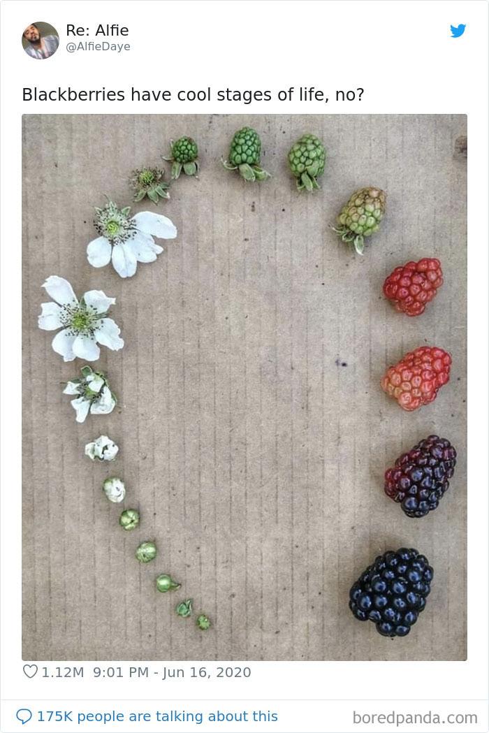 生物研学组图:分享棉花、蓝莓等动植物的完整生命周期Life Cycle