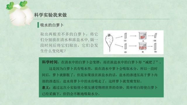 """""""走进乡村系列:白萝卜主题研学活动课件"""