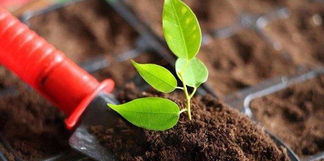 土壤是如何形成的?为什么已经有三分之一严重退化?
