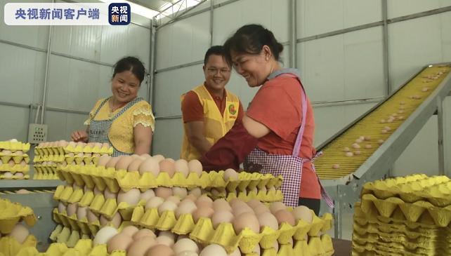 抱团发展新模式 17个村联合养殖蛋鸡脱贫致富