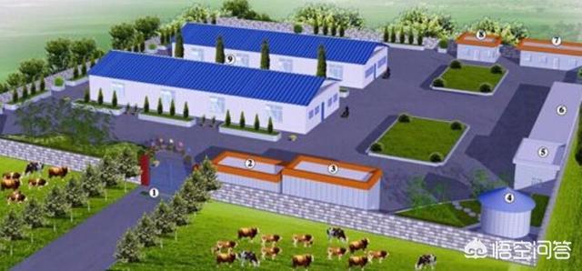 可行性分析报告:规模化养牛场如何选址及怎么设计为好?