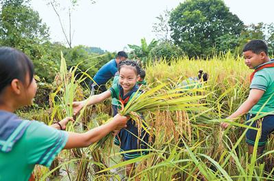 小朋友們驚不驚喜?教育部要求城市中小學校安排農業生產勞動
