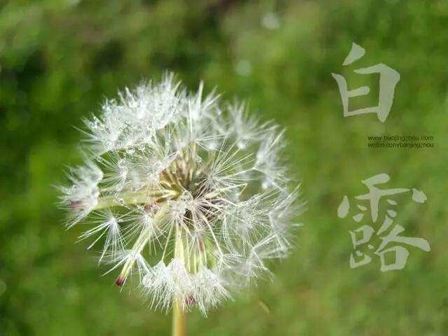 """农业谚语:为什么说""""白露水,赛砒霜,立冬水,似蜜糖""""?"""