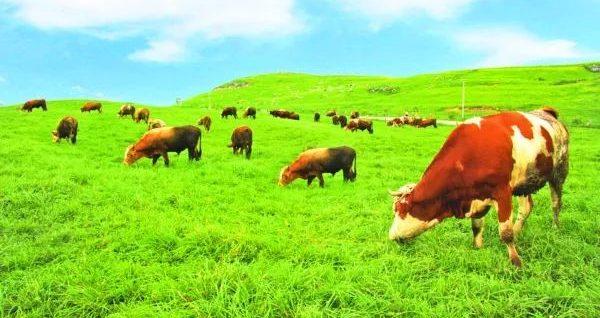 2025年中国或将出现粮食缺口;我国加大支持畜牧业绿色发展